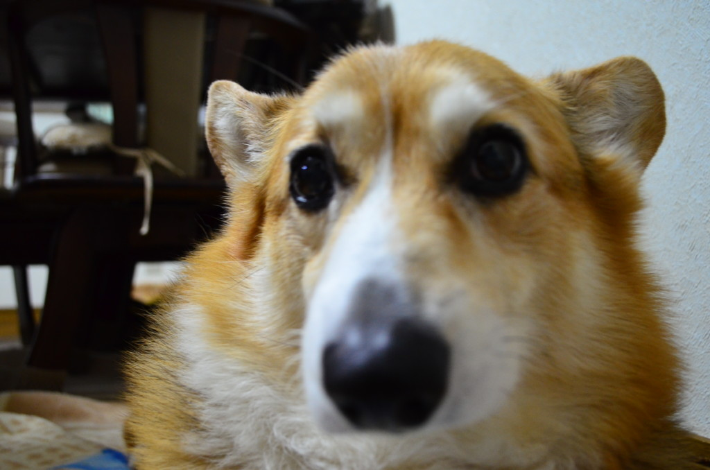 愛犬が風や雷、花火など大きな音を怖がる時の注意点