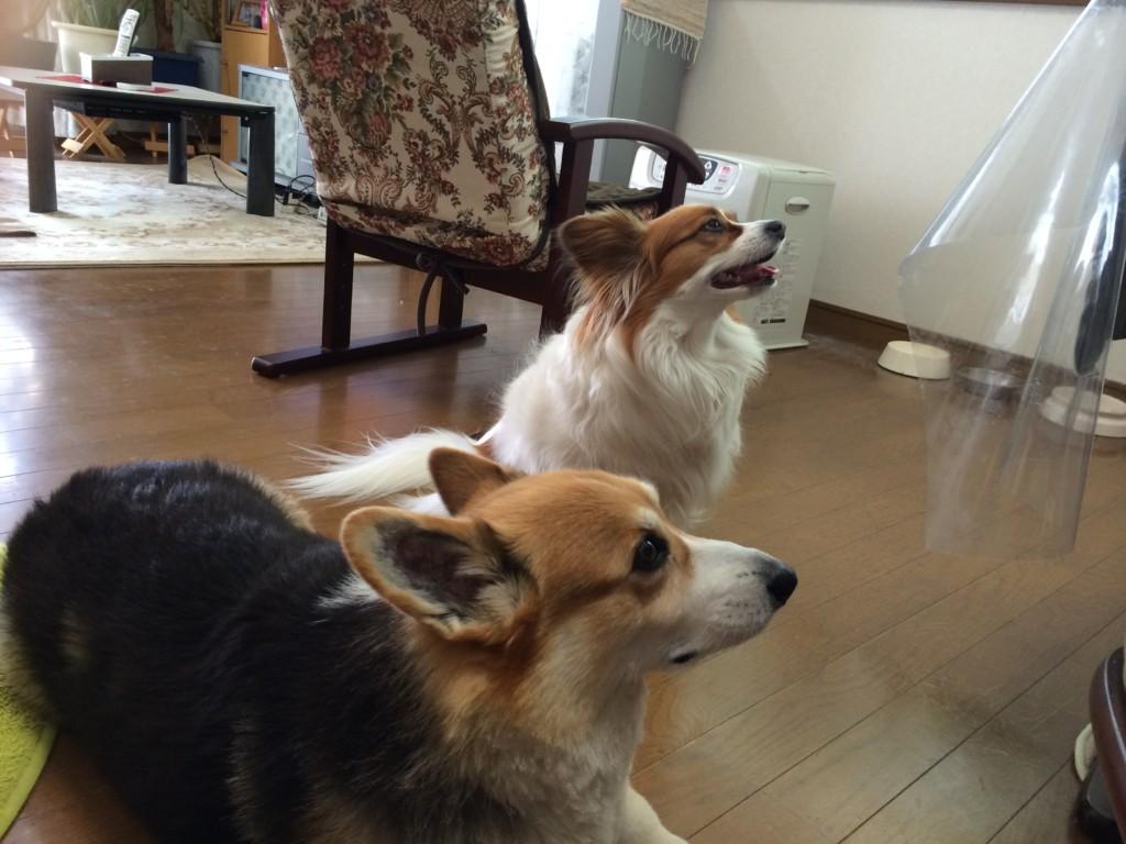 犬を多頭飼いするメリットとデメリット