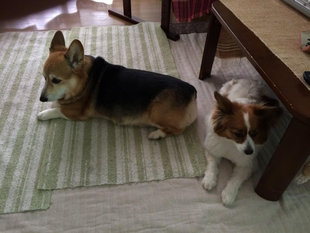 犬を多頭飼いするときの相性や気をつけるべき注意点