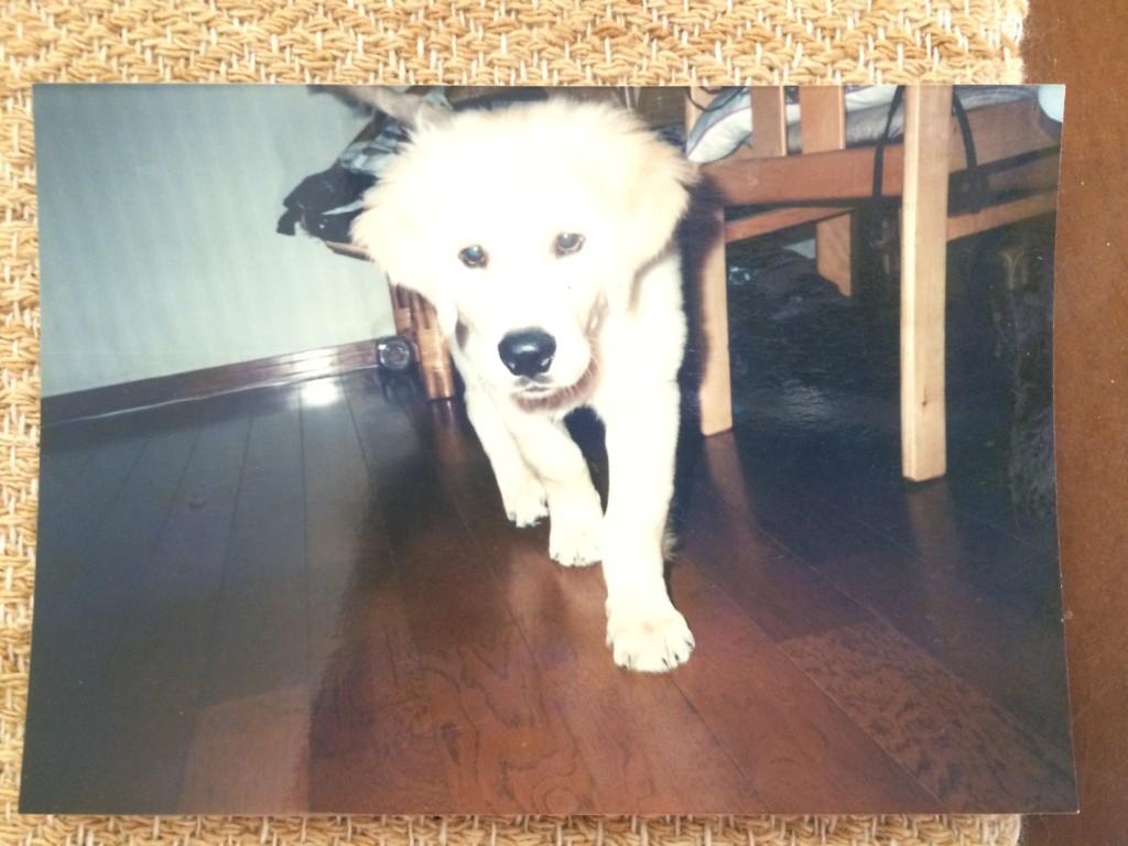 愛犬が立て続けに次々と死ぬというペットロスの悲しみから救ってくれたゴールデンレトリバーのジョン君