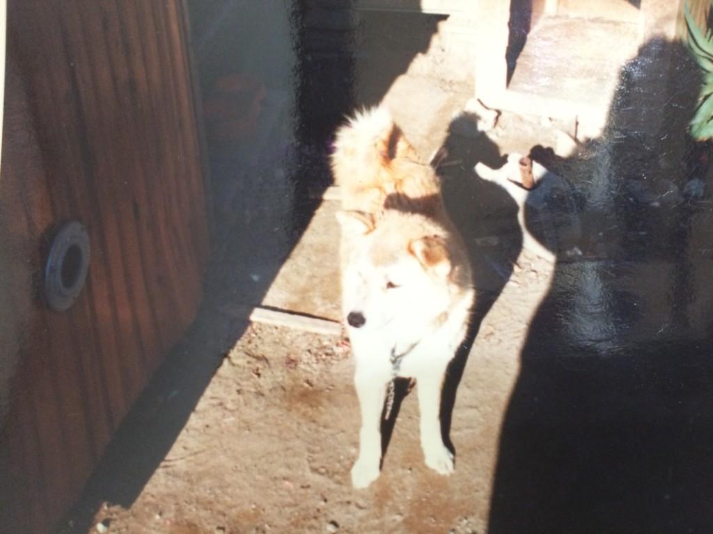 ペットロスから抜け出そうと新しい犬を迎えるも立て続けに次々と死んでしまった