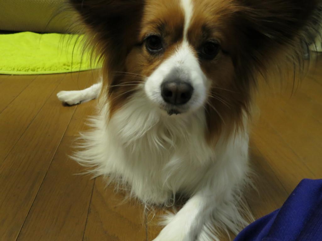 なんでも食べる犬は犬のロープのおもちゃを誤飲した!?