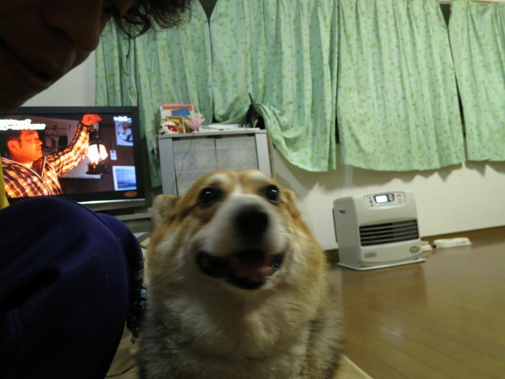 犬が雷など大きな音に怖がっている時の対処法