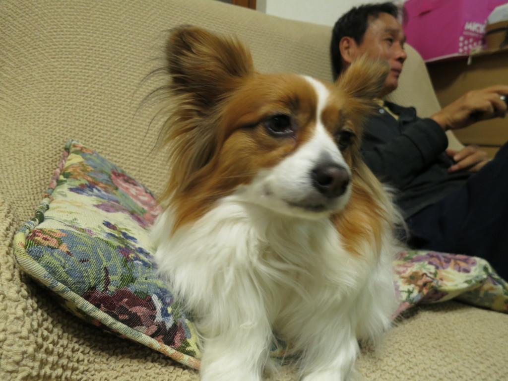 人がくしゃみや咳をするときの犬の反応