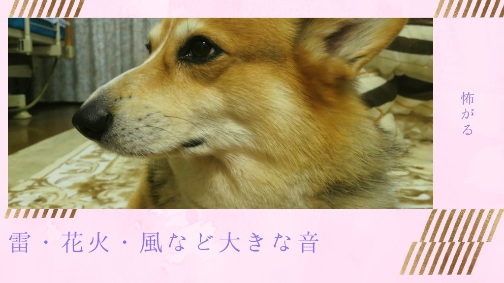 犬の雷恐怖症とは?雷を怖がるなど大きな音が苦手な原因や注意点を徹底解説