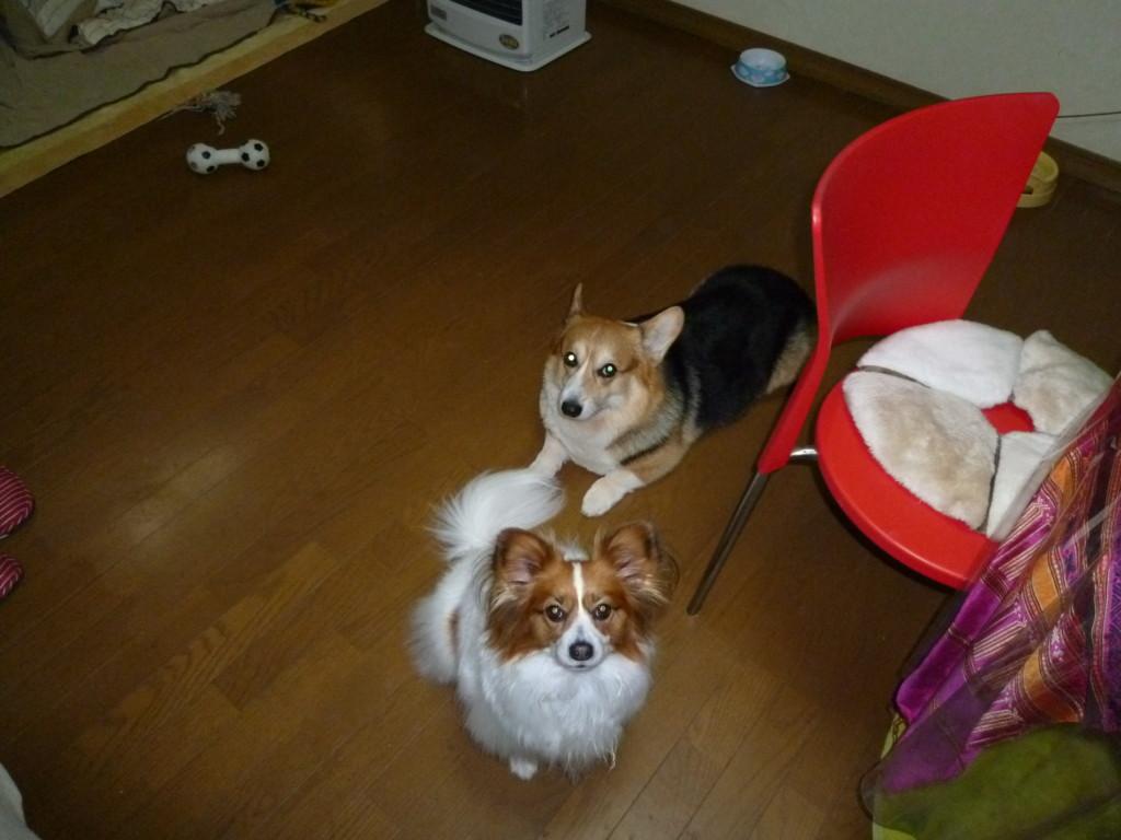 まとめ 犬のおもちゃの種類で飲み込んでしまうロープや紐の犬用のおもちゃは危険です