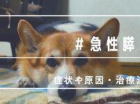 愛犬が急性膵炎に!無事に回復したけど獣医さんに教わった症状や原因・治療法まとめ