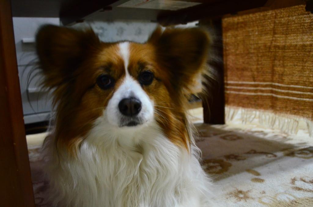 犬の急性膵炎の原因や症状・検査法・治療法から入院期間