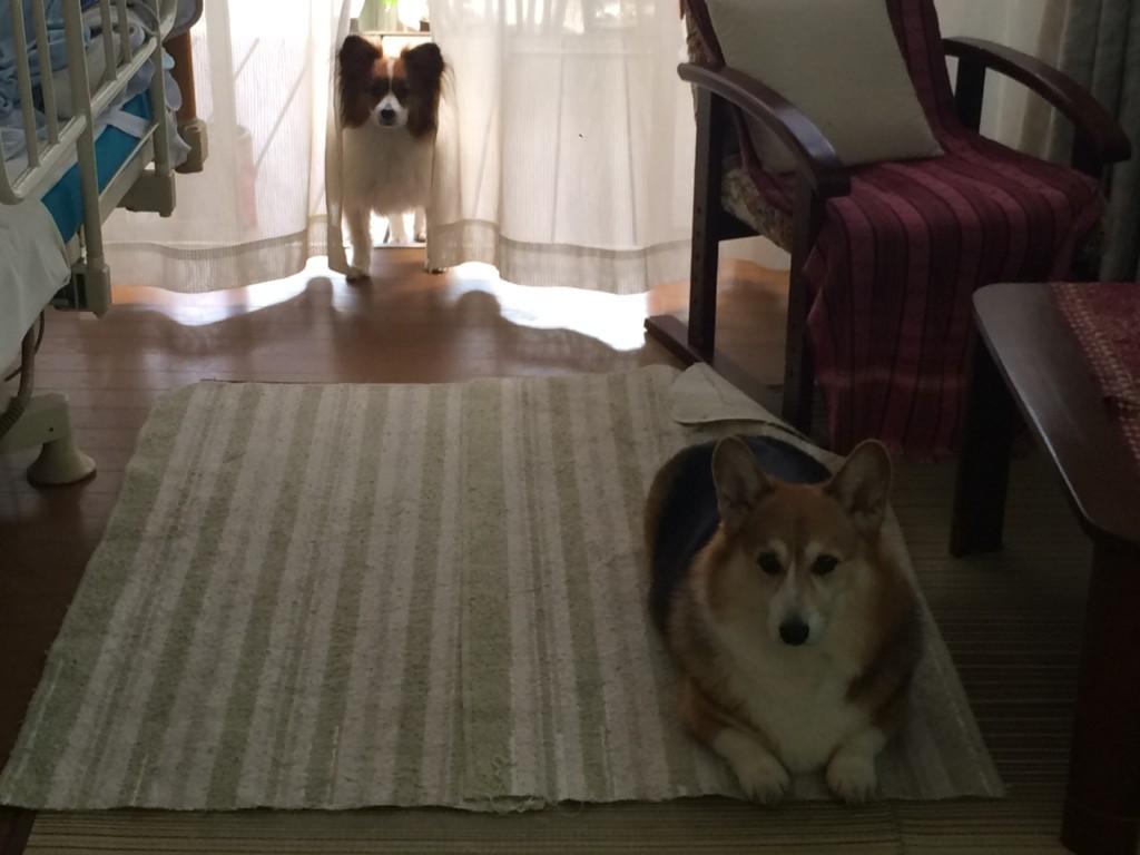 まとめ 犬のノミ・マダニを見つけたらなるべく動物病院で取ってもらってください