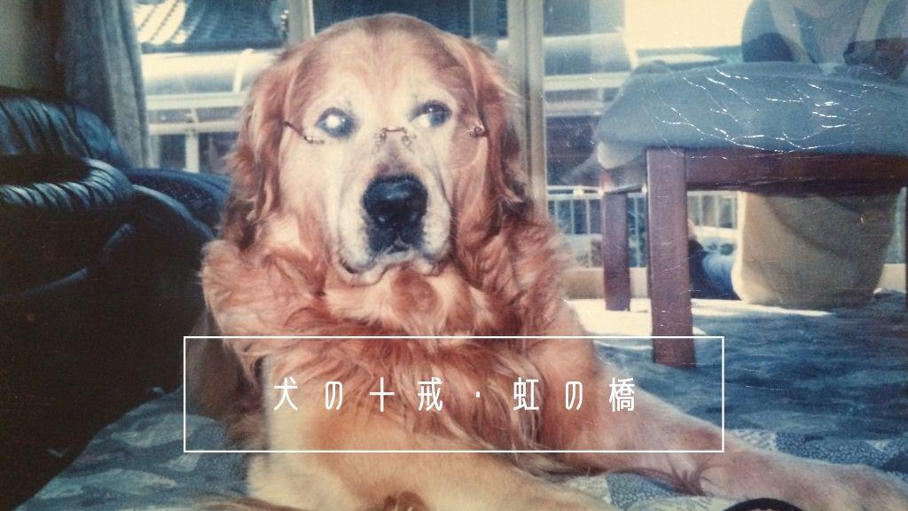 犬の十戒・虹の橋とは?愛犬の最期が犬と私の10の約束と同じでした