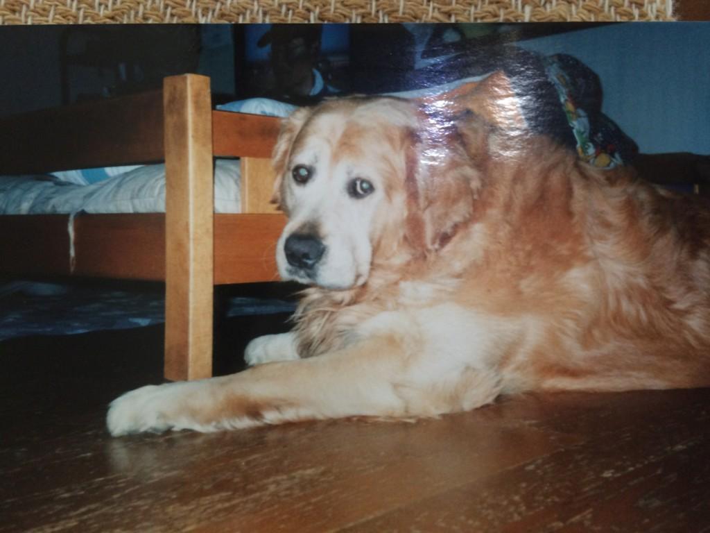 愛犬のジョンくんの最期はまるで映画「犬と私の10の約束」