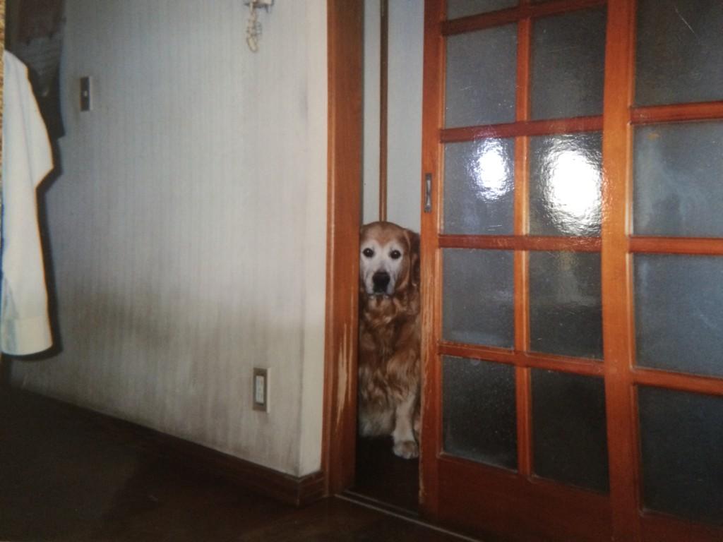 犬の十戒・虹の橋とはペットと飼い主との強い絆で涙するお話です
