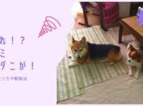 犬のノミ・マダニを見つけたら?獣医さんから教わった取り方や駆除法、症状・病気を徹底解説
