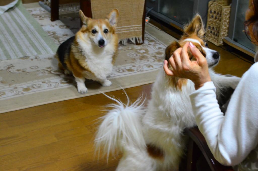 まとめ 犬が食べてはいけないものをしっかりと覚えて愛犬の健康を守ってあげてください