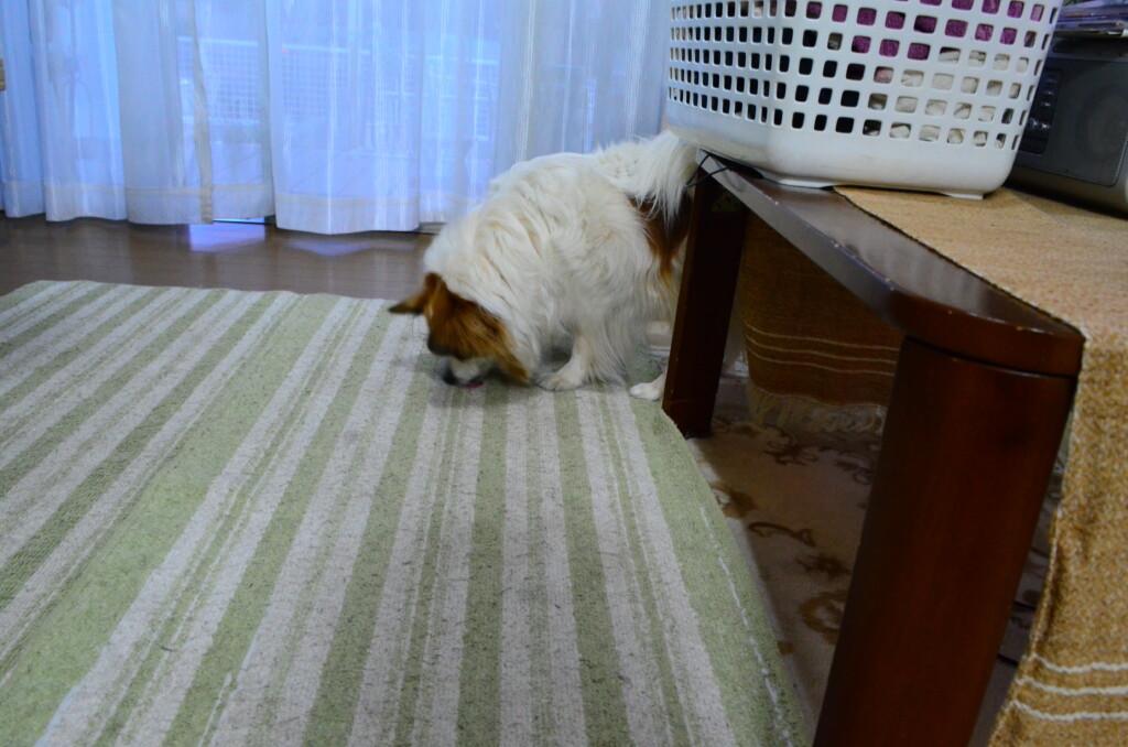 犬の尿漏れの対策