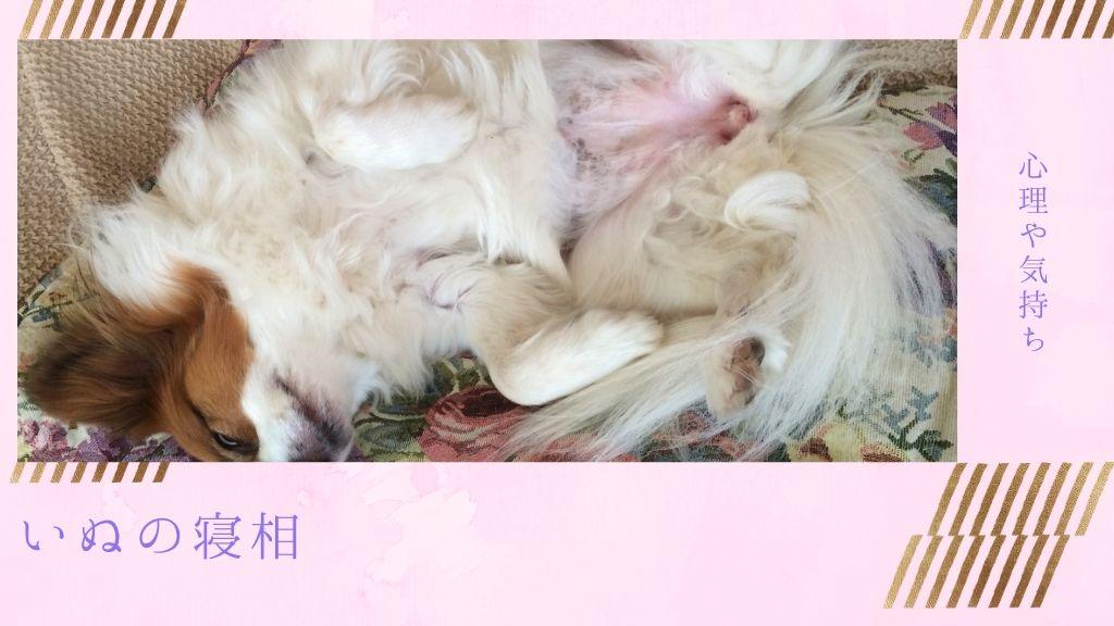 犬が仰向けで寝る?犬の寝相を徹底解説【愛犬の心理や気持ちがわかる】