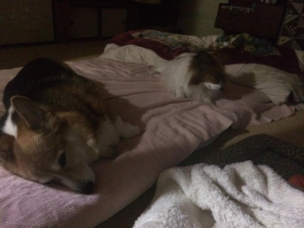 まとめ 犬の寝相で心理や犬の気持ちがわかります