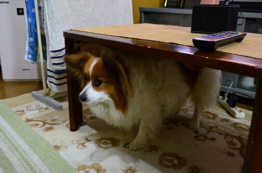 犬が他人や他人の犬に噛みついてしまった場合の法律