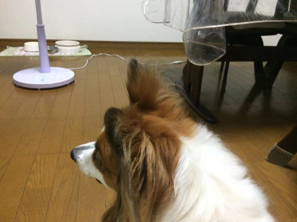 犬が犬を噛んで流血した時の対処法