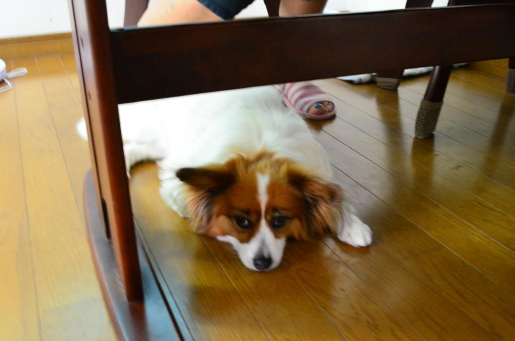 まとめ 犬の熱中症は湿度も重要で、対策をして愛犬を守ってあげてください