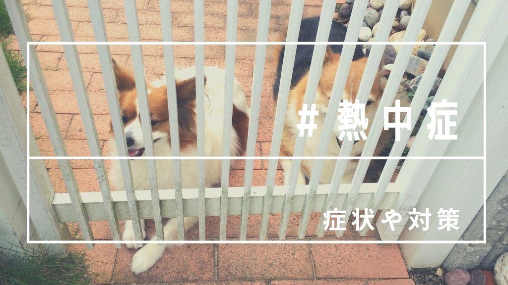 【命が大事】犬の熱中症!室内でもエアコンで対策を!温度や症状まとめ