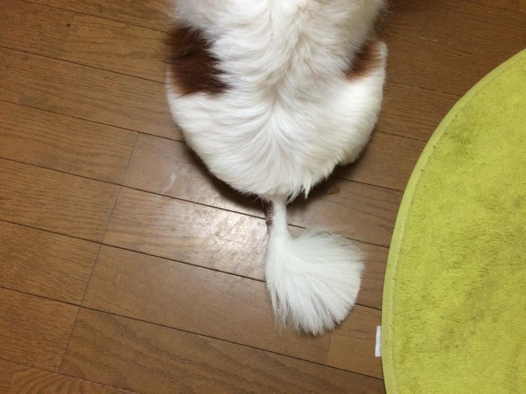 犬のホットスポット(急性湿疹)の治療法