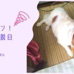 犬が膝蓋骨脱臼(パテラ)に!手術しないで治る?動物病院で教わった症状や治療法まとめ