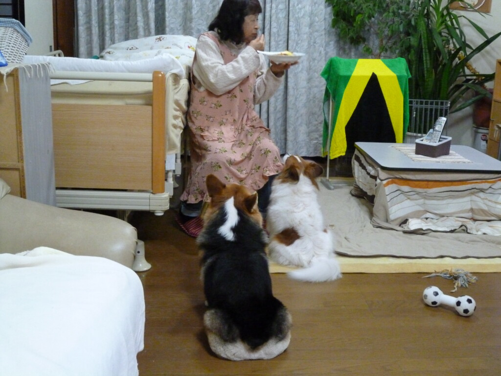犬のしつけは何歳までにする?シニア犬は何歳から?