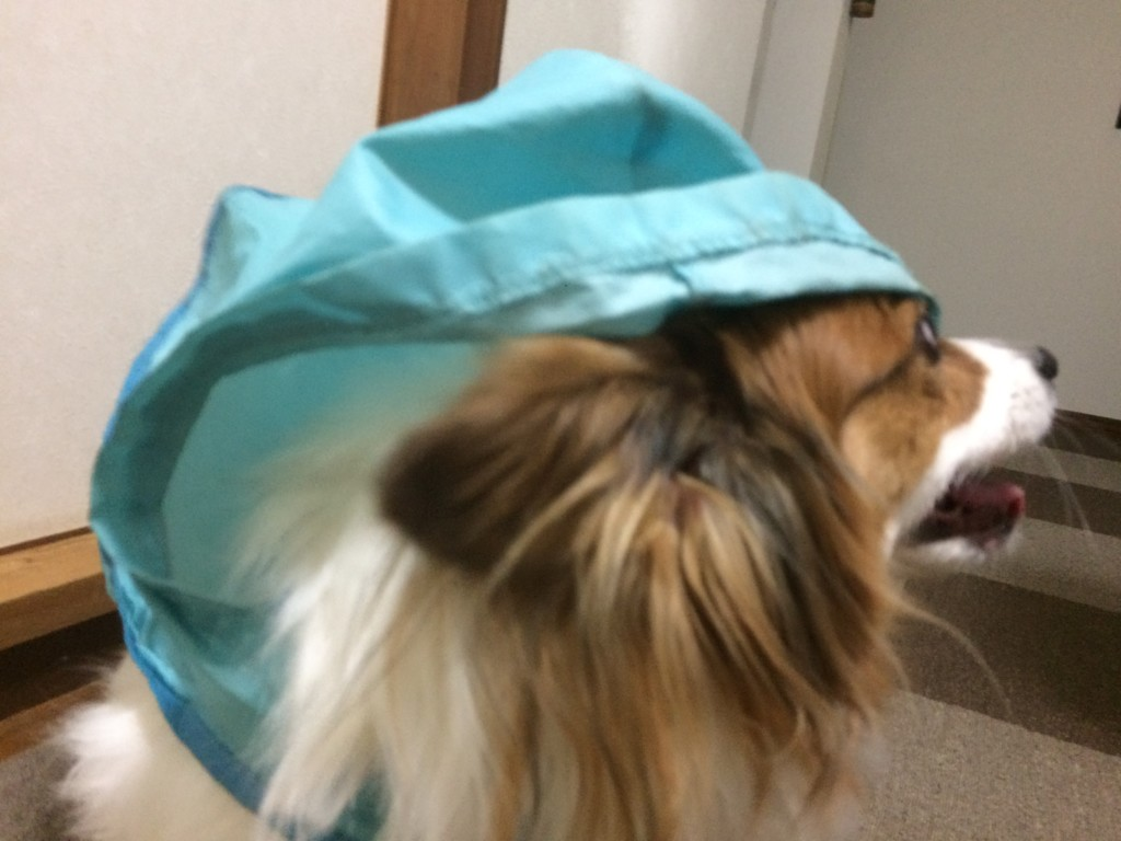 雨の日でも飼い主さんが犬のお散歩に行くべき理由とは?