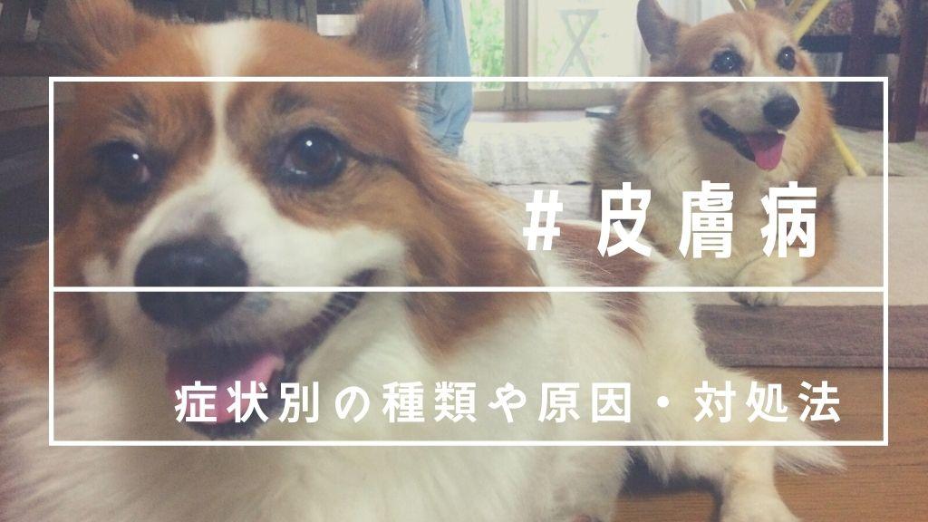 犬が皮膚病で赤い、黒いかさぶたが!獣医さんに聞いた種類や原因まとめ