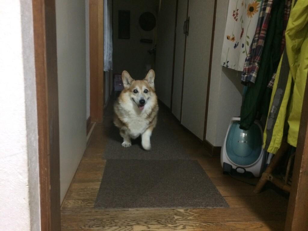 犬のてんかんは飼い主さんがしっかりと見守ってあげて支えてあげてください