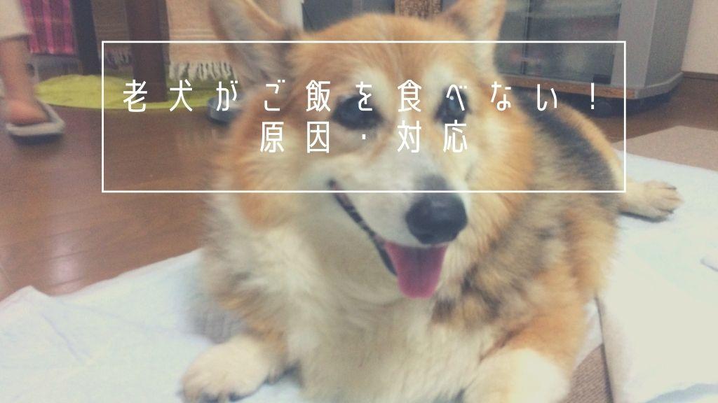 老犬がご飯を食べない時は要注意!愛犬に試してみた色々な対応や原因まとめ