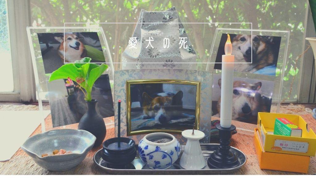 愛犬の死は辛いけどコーギーのカイ(海)くん今までありがとう。大好きだよ