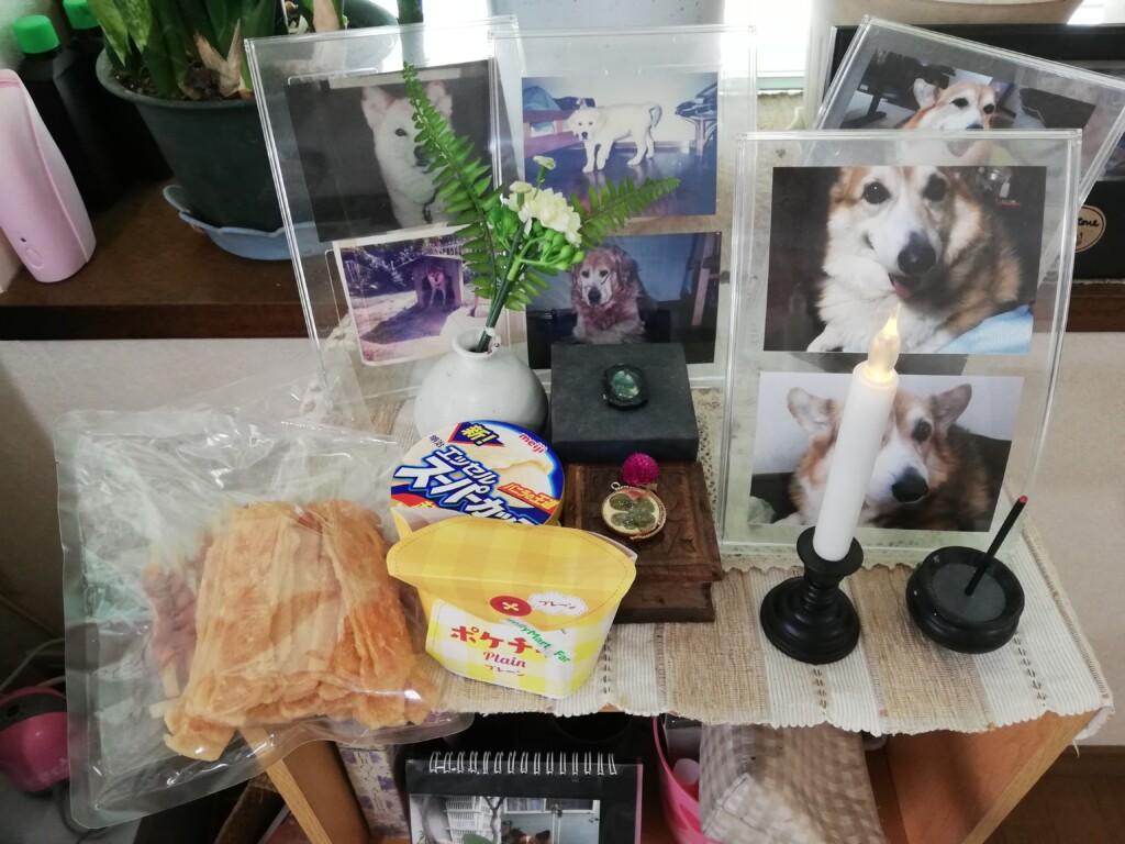 愛犬のカイくんの一周忌のお供え物は大好きなジャーキと最期に食べれた唐揚げとアイスクリーム