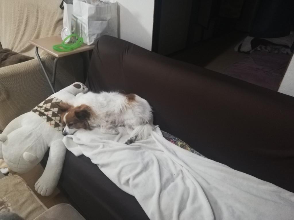 犬が食欲不振で吐き気に襲われた