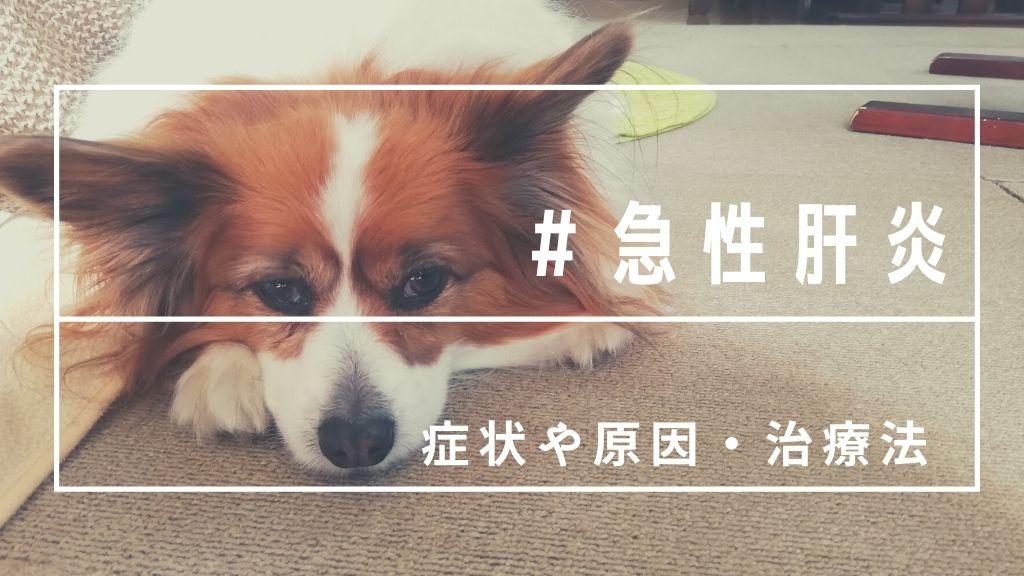 突然愛犬が急性肝炎に!治る?動物病院で教わった原因や治療法まとめ
