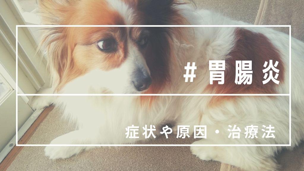 犬が胃腸炎に!元気がない?動物病院で学んだ原因や症状・治療法まとめ