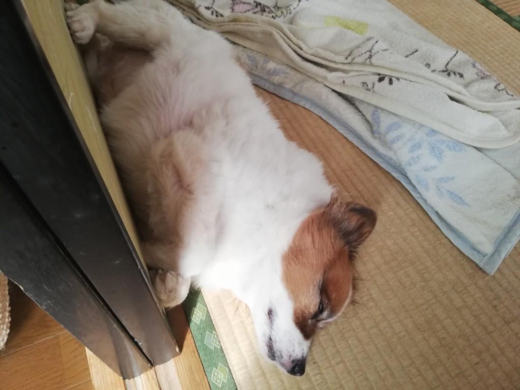 犬の脾臓の腫瘍の原因や症状・検査法・治療法