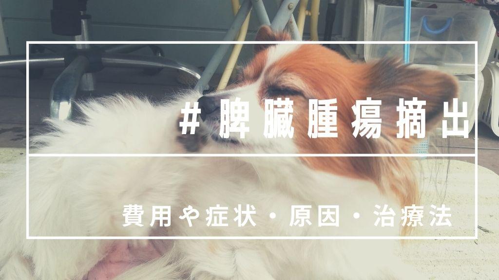 愛犬の脾臓に腫瘍が!摘出する?手術したからわかる動物病院で教わった症状や治療法まとめ