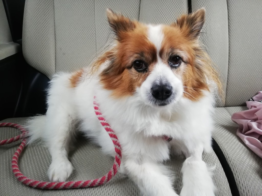 まとめ 犬の胆嚢摘出手術は難易度が高く犬にも負担があるので動物病院の先生とよく相談してください