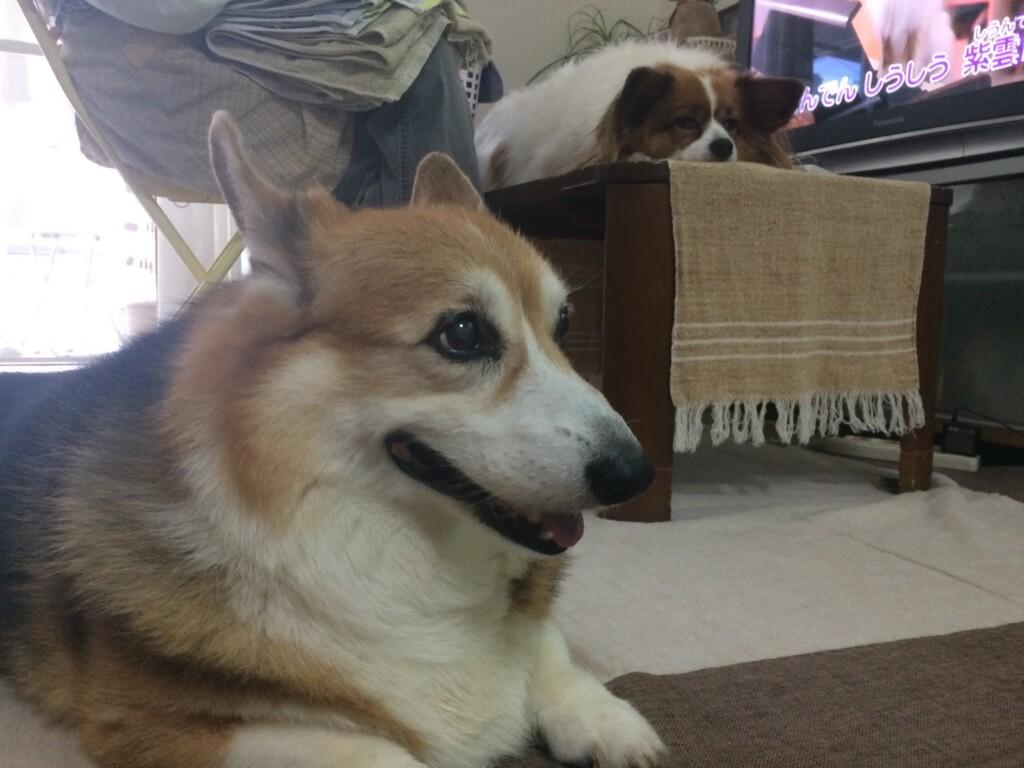 老犬や小型犬にあうコスパのいいドッグフードです